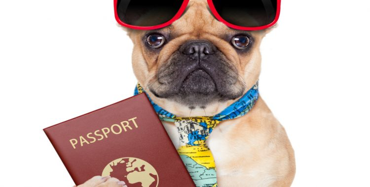 pet-passport-1265x725