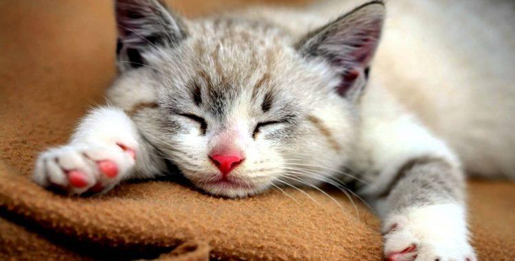 kediler-neden-mirlar-patiliyo-2