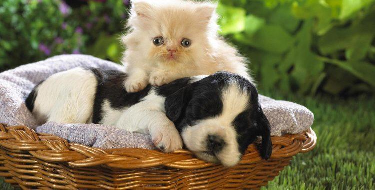 kedi-ve-kopek-beslenmesi