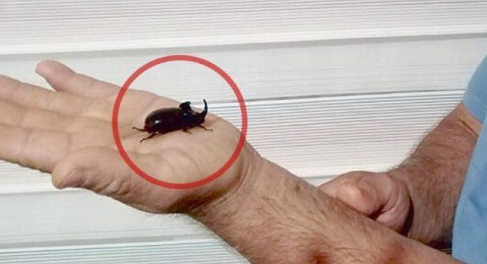 gergedan böceği
